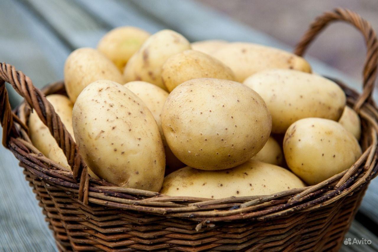 Свежий картофель. Пермский край, Соликамск
