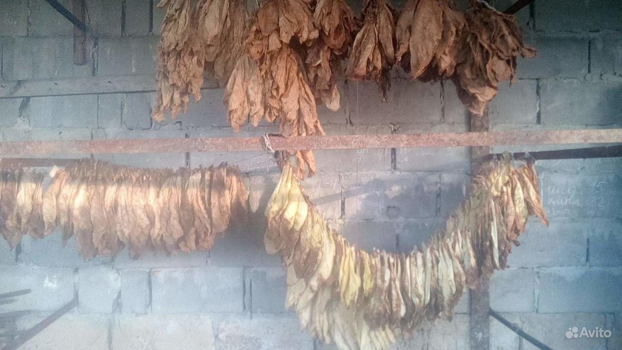Семена табака, рассада купить на Зозу.ру - фотография № 4