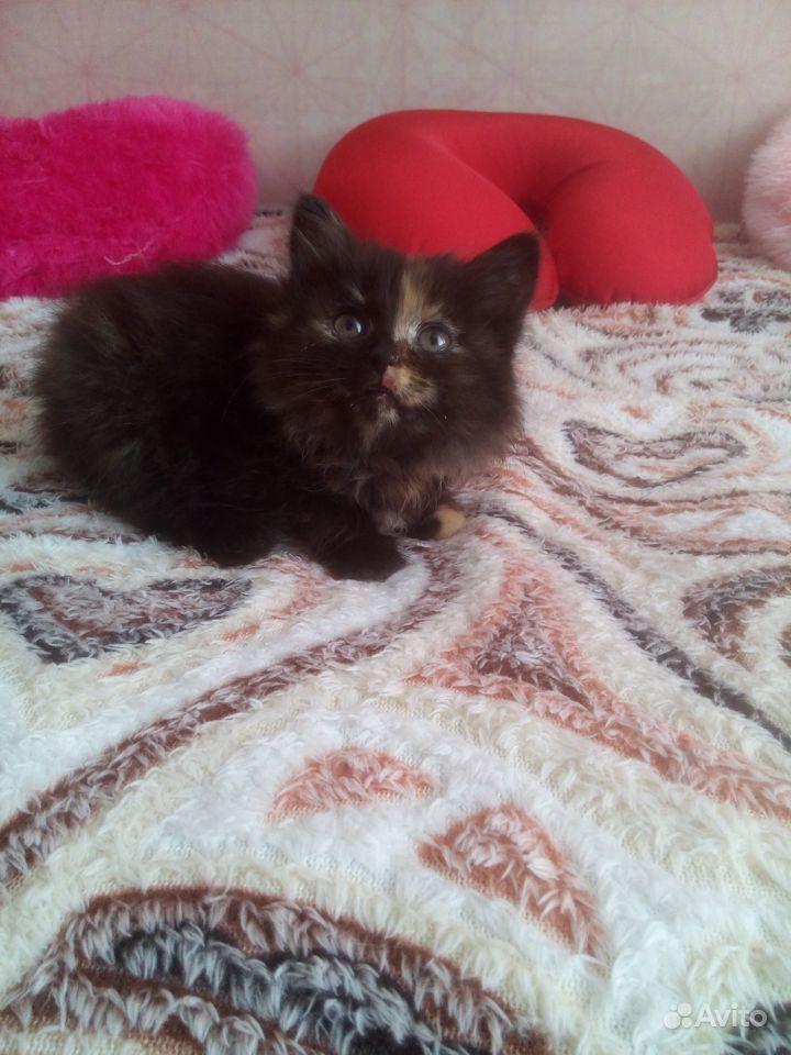 Котёнок в Абатском - фотография № 1