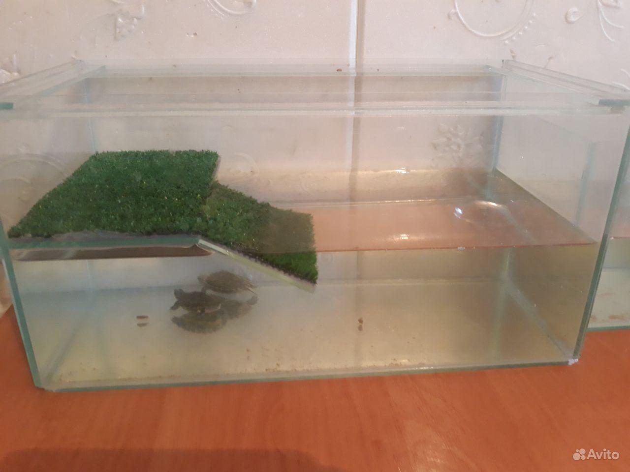 Продаю аквариум и две черепахи