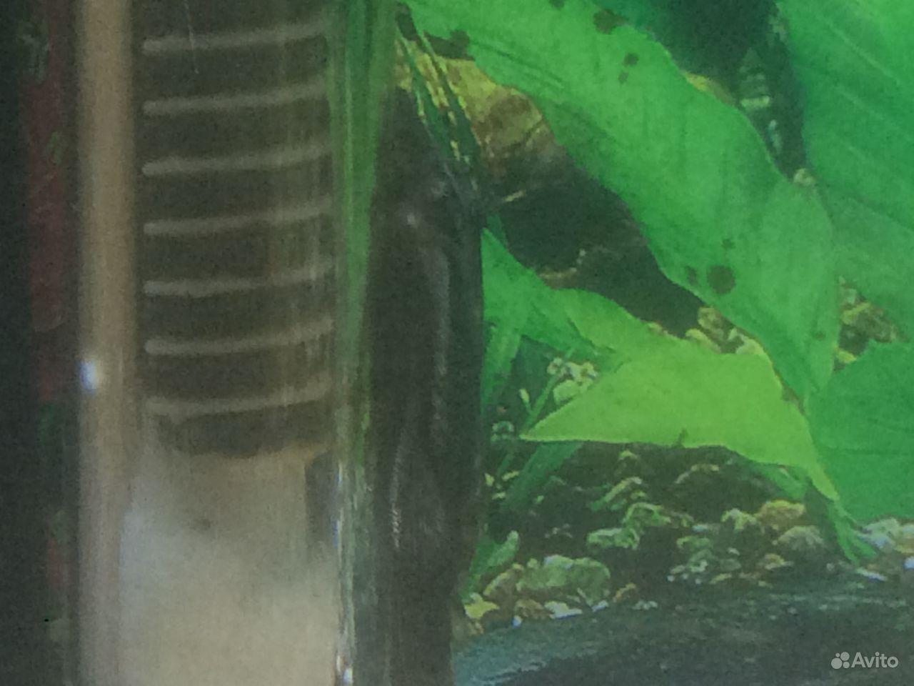 Рыбы купить на Зозу.ру - фотография № 4