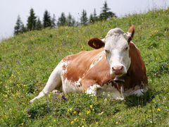 Мясо говядина
