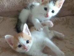 Прекрасные котятки (мальчики) - в заботливые руки