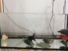 Продаю со всеми рыбами аквариум и плюс фильтр