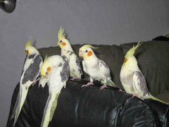 Попугай разных видов