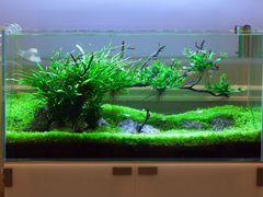 Изготовление аквариумов,сампов,акваскейпов