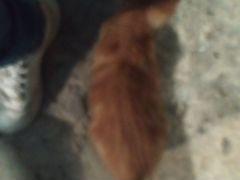 Маленький рыжий котнок ищет дом