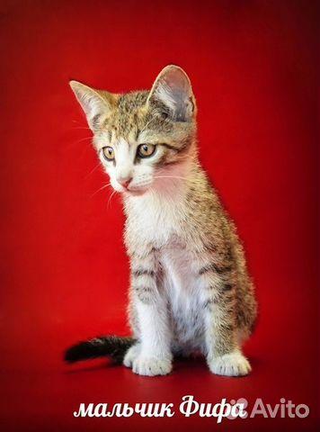 Котята в дар спб на авито