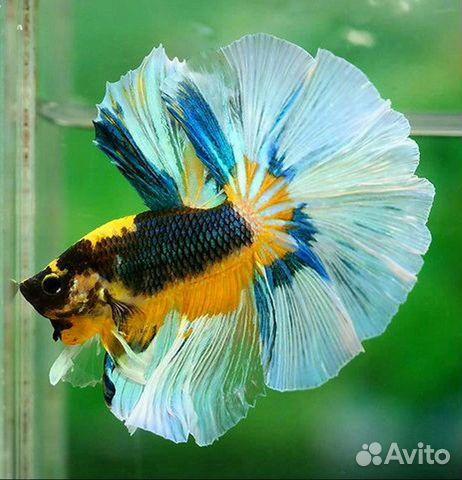 Аквариумные рыбы фото с названиями и описанием