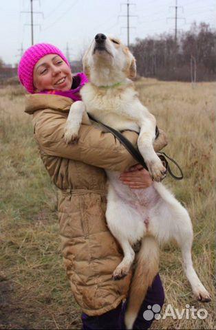 Собака щенок Эви в добрые руки бесплатно купить на Зозу.ру - фотография № 6