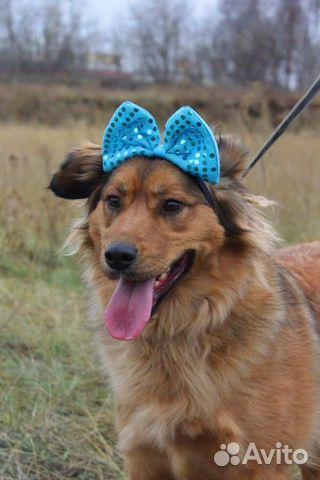 Семейная собака Джесс в дар купить на Зозу.ру - фотография № 3