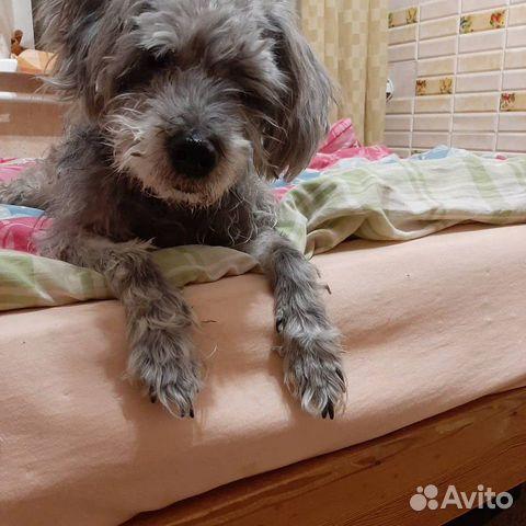 Собачка в добрые ручки купить на Зозу.ру - фотография № 3