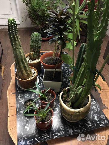 Комнатные растения 89029113406 купить 1