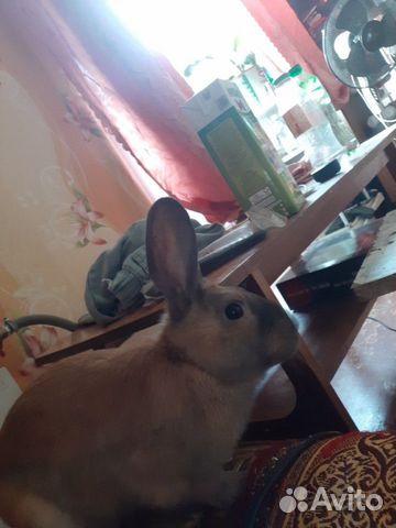 Кролик декоративный 89292032006 купить 3