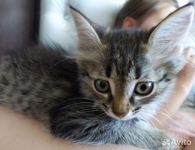 Gebe ein Kätzchen  89279273141 kaufen 2