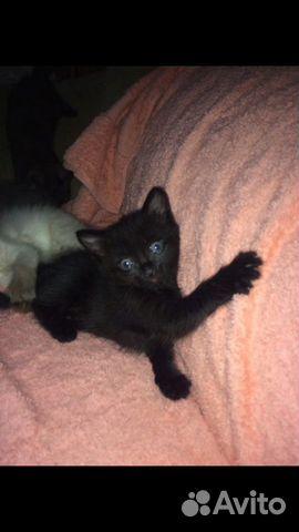 Котята в добрые руки  89000273244 купить 7