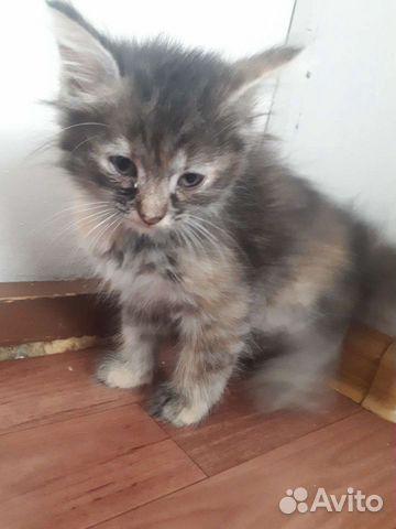 Котенки  89011211352 купить 2