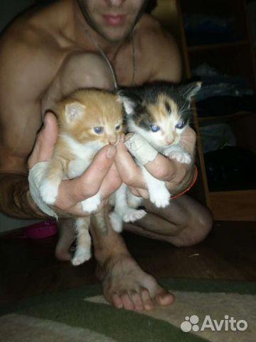Кошка  89842869438 купить 3