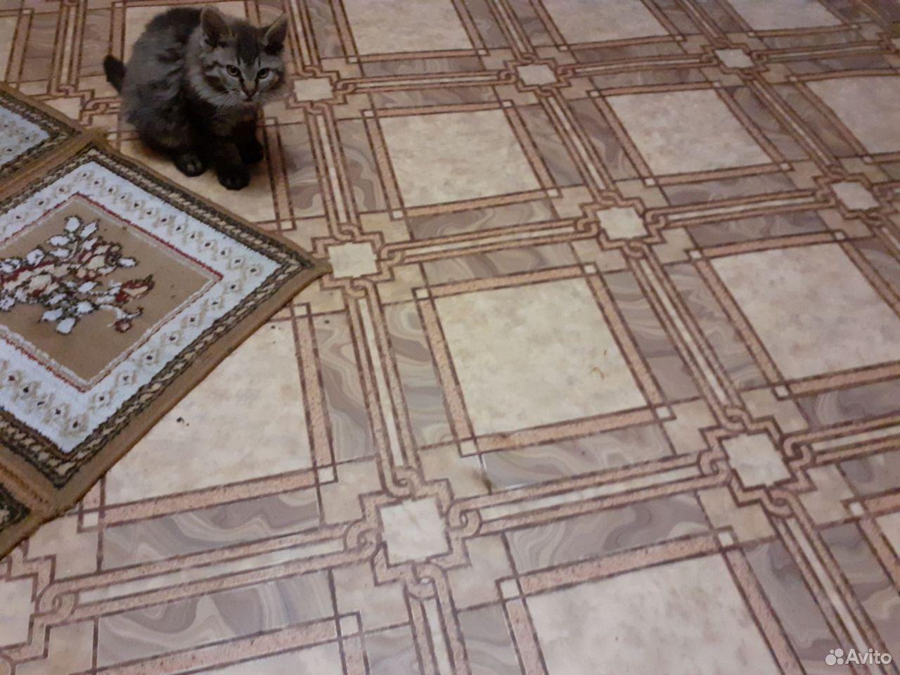 Отдам котенка(мальчик) в хорошие руки  89159695428 купить 1