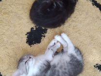 Котята мальчики, в добрые руки. К горшку приучены