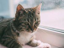 Кошечка Коша, Заюшка, миниатюрная, нежная