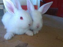 Крольчат на индюшат
