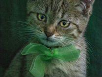 Котяшка обнимашка в дар