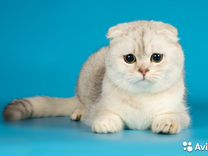 Вязка С котами
