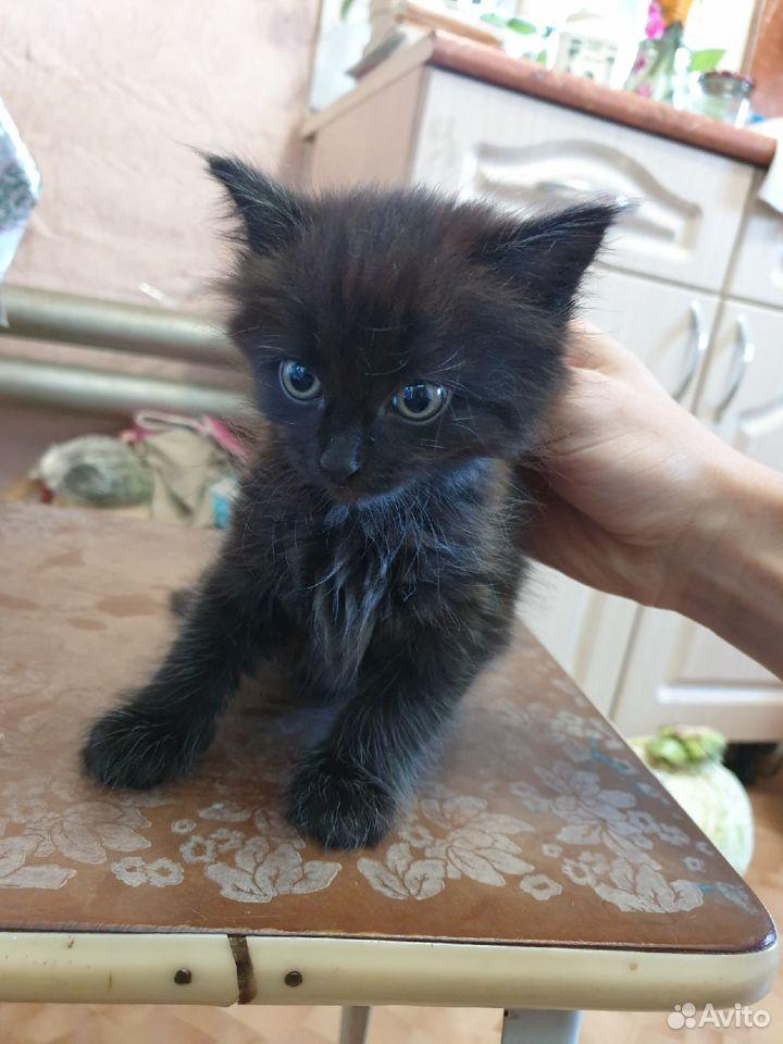 Кошка  89876768416 купить 4