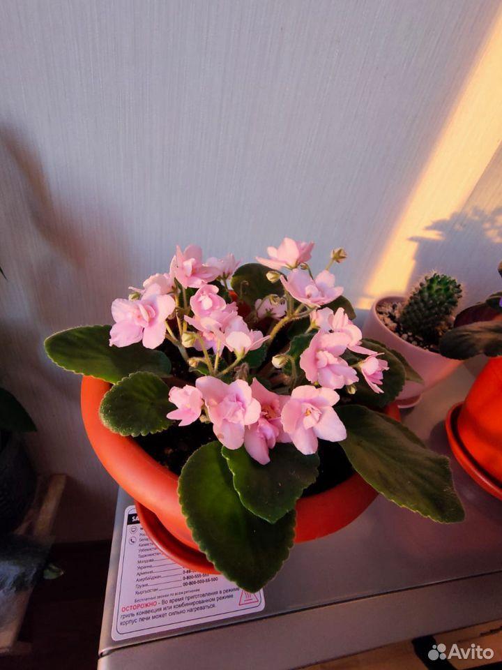 Цветы  89176088037 купить 2