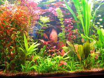 Набор из 10 живых аквариумных растений.прополка