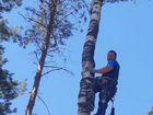 Спил деревьев,Расчистка участков