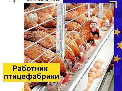фильм, основанный стихи поздравления работников птицефабрики уже