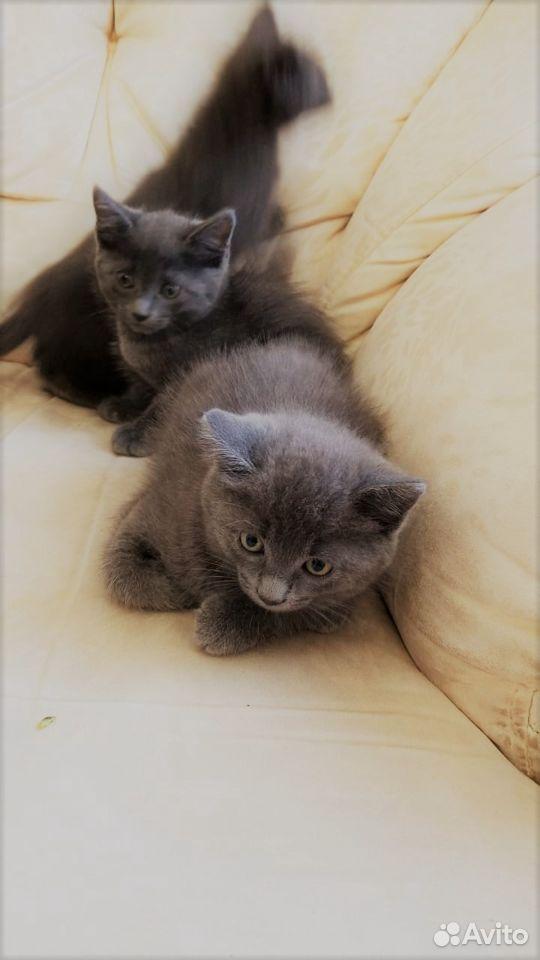 Продам прекрасных котят