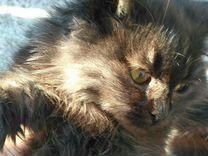Мальчик 3 мес ищет семью — Кошки в Геленджике