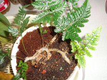 Растения для воздуха
