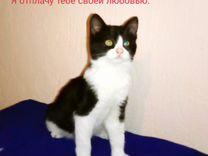Котёнок ищет дом — Кошки в Геленджике