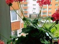 Продаю комнатные цветы :
