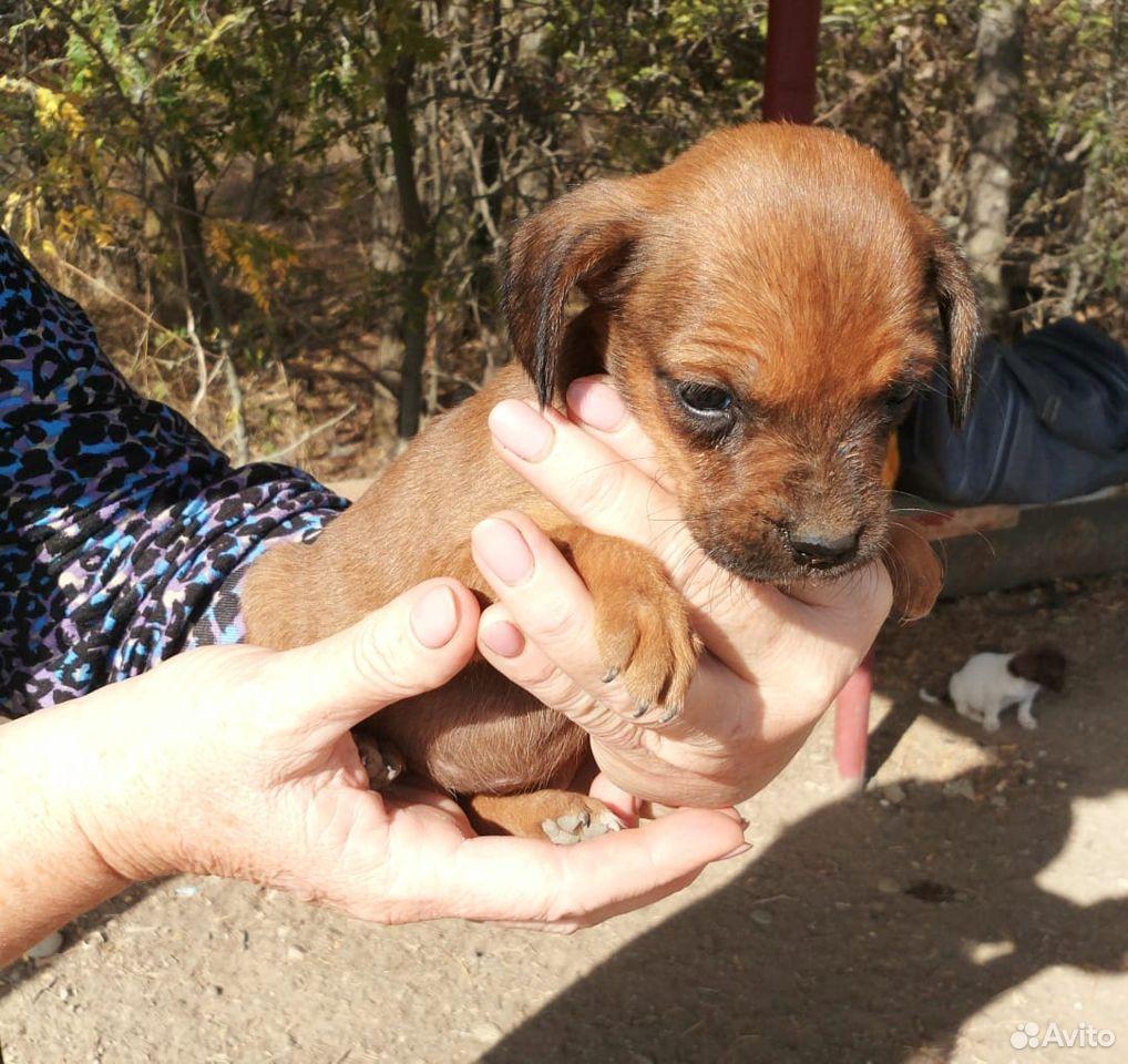 Спасите собачку  89887414509 купить 1
